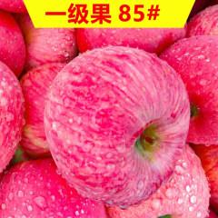 正宗烟台栖霞红富士苹果   85#大果精美礼盒装(含礼盒10斤) 包邮